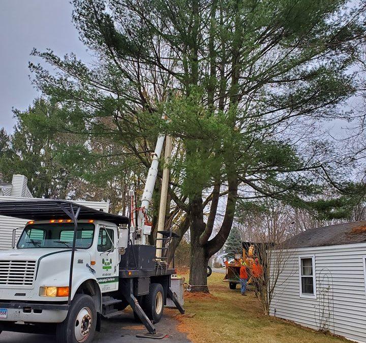 Best Tree Service in Wolcott, CT | Tree Removal | Tree Cutting | Stump Removal in Wolcott, CT