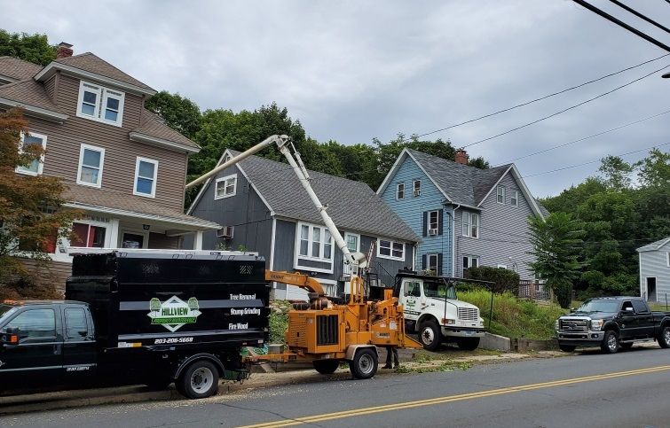 Best Tree Service in Meriden, CT | Tree Removal | Tree Cutting | Stump Removal in Meriden, CT