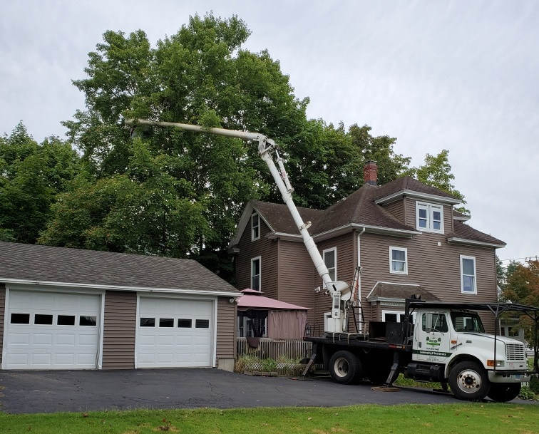 Prospect, CT – Large Tree Removal & Stump Grinding – Tree Maintenance in Cheshire, CT