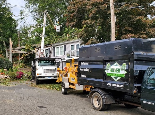 Best Tree Service in Southington, CT |  Tree Removal | Tree Cutting | Stump Removal