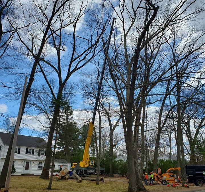 Bristol, CT Tree Removal Services – Stump Grinding and Removal in Bristol
