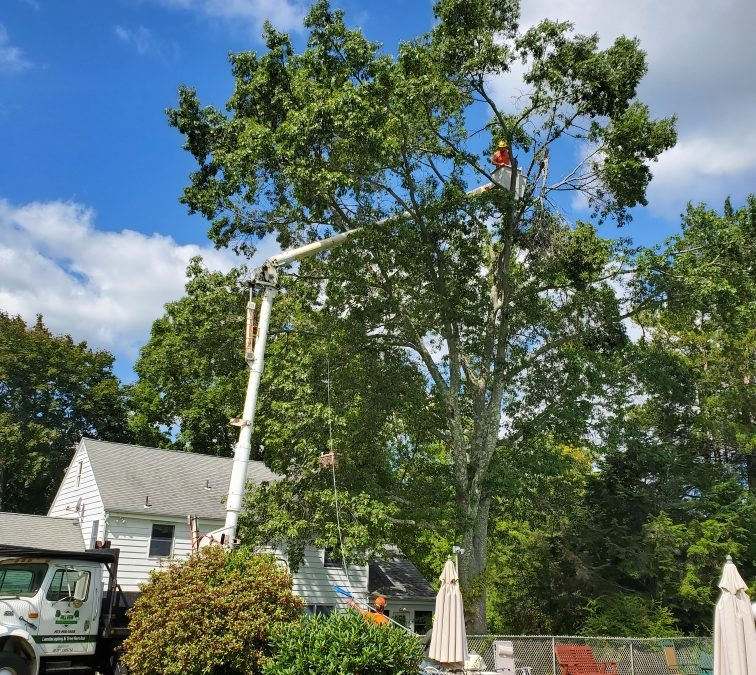 Naugatuck Tree Service, Tree Trimming, Stump Grinding & Tree Removal in Naugatuck, CT