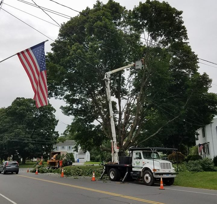 Southington, CT | How Much Does Tree Removal Costs? | Hiring A Tree Removal Company | Tree Removal Service Near Me