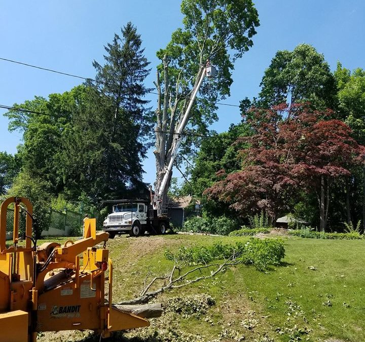 Meriden, CT | Affordable Tree Removal | Tree Service Removal Near Me