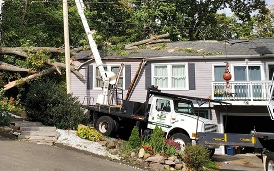 Woodbridge, CT | Emergency Tree Removal Company | Tree Cutting Service Near Me