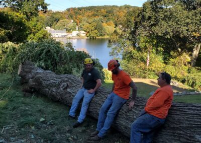 3Tree & Stump Removal Project in Woodbridge, CT