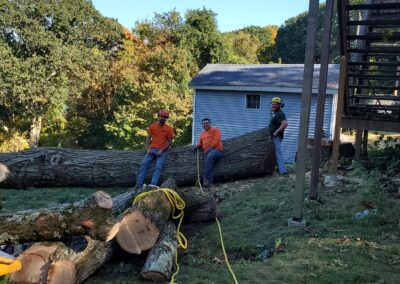 Tree & Stump Removal Project in Woodbridge, CT