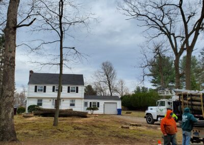 2Large Tree Removal Project in Watertown, Connecticut