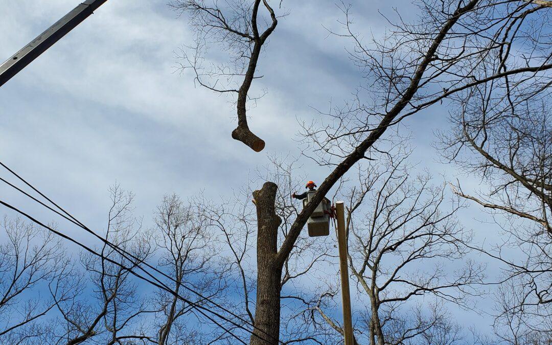 Watertown, CT | Tree Removal Service Company & Arborist | Best Tree Cutting & Maintenance Near Me