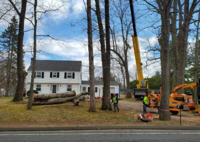 Large Tree Removal Project in Watertown, Connecticut