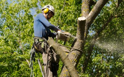 Watertown, CT | Pricing and Costs for Tree Removal Services & Tree Maintenance