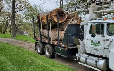 Waterbury, CT   Best Tree Removal   Best Tree Cutting & Maintenance Near Me