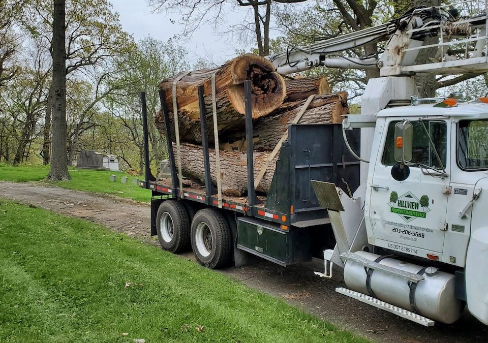 Waterbury, CT | Best Tree Removal | Best Tree Cutting & Maintenance Near Me