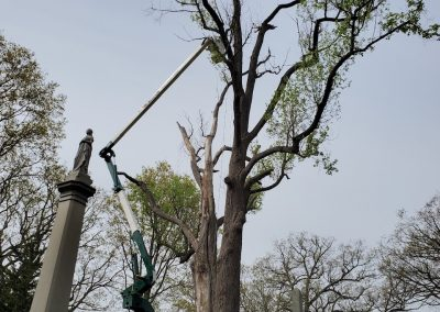 Tree Removal Project in Watertown, CT