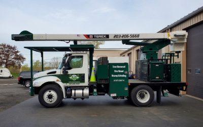 Beacon Falls, CT   Tree Removal Service   Best Tree Cutting & Maintenance Near Me